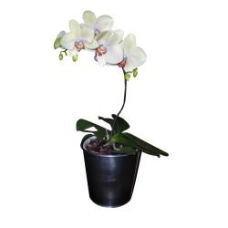 Sticker Orchid'e