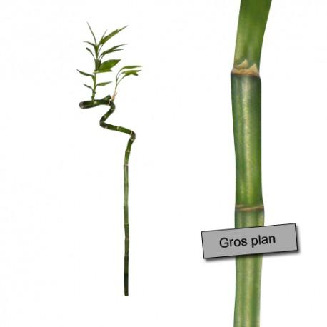 sticker bambou - Trompe l'oeil