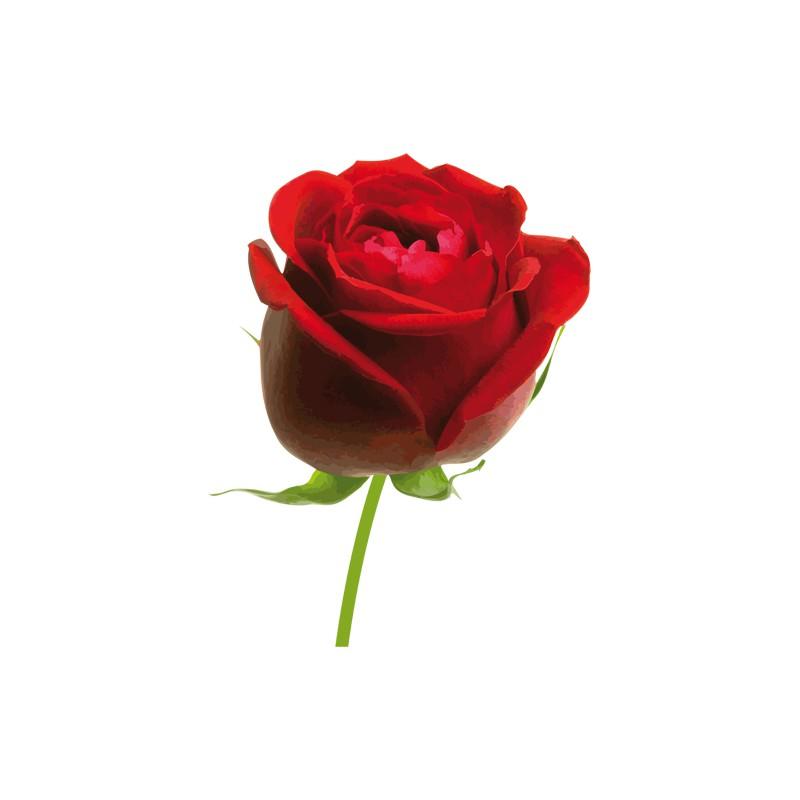 Stickers Fleur Sticker Rose Rouge Decorecebo