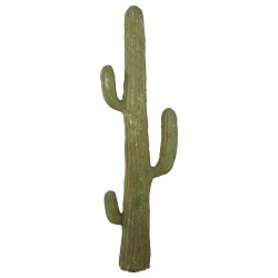 Cactus 5