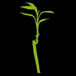 Sticker Bambou 4